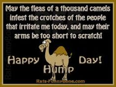 funny quotes about hump day funny quote