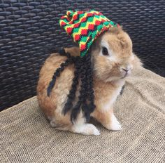 Bun Marley says have a Happy Halloween! http://ift.tt/2eSAZn7