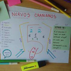 DICA DO FERIADÃO !!!! Você ainda não conseguiu entender ou decorar os 12 pares dos nervos cranianos ?! Então olha esse desenho aí :P #studymotivation #studyinspiration #cranialnerves #medicine #medstudent #physicaltherapist #physioterapy #medschool #fisioterapia #studyhard #estudaquepassa #estudaqueavidamuda #biomedicine #neuroscience