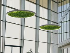 Dried moss LED pendant lamp LUCE VERDE SLIM Luce Verde Collection by Sattler