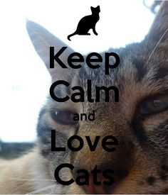 cats ♥   ...........click here to find out more     http://googydog.com