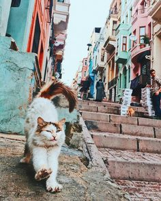 's cats are tired! Oh so much places to visit. I Love Cats, Crazy Cats, Cute Cats, Animals And Pets, Cute Animals, Cat Behavior, Cat People, Beautiful Cats, My Animal
