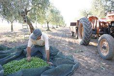 Masseria Sant'Agapito (Lucera) - Ranch recensioni - TripAdvisor