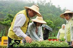 縣長林聰賢(左)觀賞園區的草本植物。/udn 吳佩旻攝(0323)