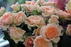 Mini ruže...