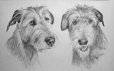 Hundeportraits Bleistiftzeichnung