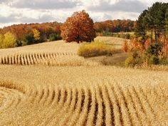 Ready_for_Harvest_Cadillac_Michigan