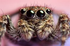 Look into my eyes...   Photo by Jeroen Stel (rspb-images.com)  #RSPB #nature #wildlife