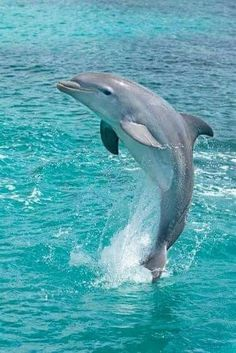 Fotó Animals Beautiful, Beautiful Creatures, Beautiful Fish, Animals And Pets, Cute Wild Animals, Tame Animals, Whales, Dolphin Images, Dolphin Photos