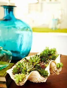 Succulent Shell Planter Ideas & Tips