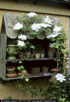 Lovely trailing delicate white Clematis against the rustic garden pot display! Moon Garden, Dream Garden, Garden Pots, Home And Garden, Garden Sheds, Back Gardens, Outdoor Gardens, Potting Tables, Potting Sheds