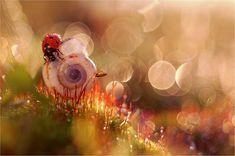 magdalena-wasiczek 21 Fantastically Captured Macro Photography With Natural Beauty