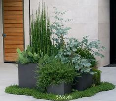 Modern Vegetable Gardening Landscaping Ideas For Front Of House Contemporary Plants Planters Architectural Outdoor Lead Pots Using Textural Including Equisetum Planting Design Small Garden Tree - Box Ball Planting Architectural Outdoor Outdoor Planters, Garden Planters, Succulents Garden, Outdoor Gardens, Front Yard Planters, Outdoor Decor, Front Yard Landscaping, Landscaping Ideas, Outdoor Landscaping