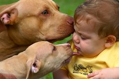 """Mommy Pit     """"That's it.  Kiss the little humans very gently for they are so fragile and must be protected.""""  Baby Pit    """"I promise Mommy to be gentle and protect them just like you"""""""