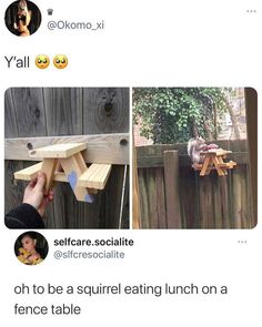 Our National Bird, Secret Song, Animal Memes, Squirrel, Fence, Singing, Songs, Photo And Video, Pets