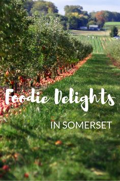 A guide to the best foodie experiences in Somerset. This beautiful county is home to cheddar cheese, an excellent selection of ciders and some top-notch restaurants. Uk Holidays, Somerset, Cheddar Cheese, Restaurants, Top, Travel, Beautiful, Cheddar, Spinning Top