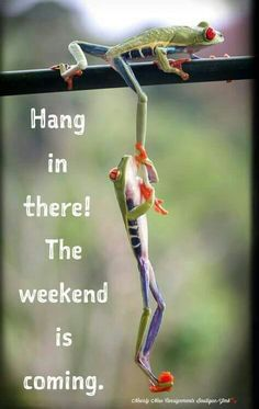 Wednesday Humor - Hump Day: Cute Animals - Hang in there! The weekend is coming. Humor 'Give us a leg-up!' Frogs use each other to climb a tree # wednesday Humor Wednesday Quotes And Images, Happy Wednesday Pictures, Hump Day Quotes, Happy Wednesday Quotes, Wednesday Humor, Its Friday Quotes, Funny Quotes, Quotes Quotes, Thursday Morning Quotes