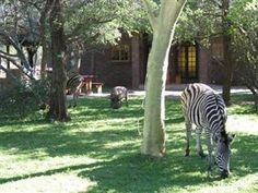 Kruger National Park Phumula Kruger Lodge and Safaris South Africa, Africa Phumula Kruger Lodge and Safaris is conveniently located in the popular Marloth Park area. Featuring a complete list of amenities, guests will find their stay at the property a comfortable one. Service-minded staff will welcome and guide you at the Phumula Kruger Lodge and Safaris. Designed for comfort, selected guestrooms offer non smoking rooms, air conditioning, desk, balcony/terrace, fan to ensure a...