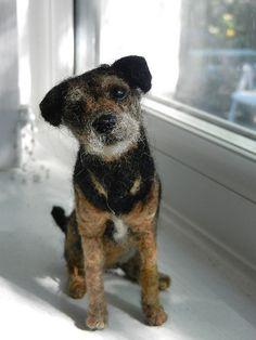 Border terrier 101 | Flickr - Photo Sharing!