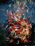 whirlpool fish frenzy