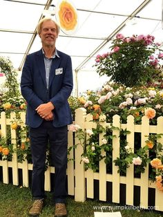 Rosarian Michael Marriott from David Austin Roses, is pictured by the David Austin Roses exhibit, inside The Festival of Roses Marquee, at the RHS Hampton Court Palace Flower Show Hampton Court Flower Show, Rhs Hampton Court, Shows 2017, David Austin Roses, Real Flowers, Hedges, Exhibit, Markers, Palace