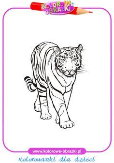 Tygrys - Kolorowanki zwierzęta