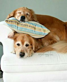Cute dog on dog ♡... pinned by StoneArtUSA.com ~ affordable custom pet memorials for everyone.