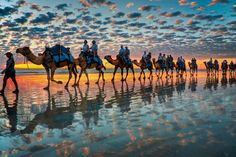 Cable Beach, Western Australia  'Camels at Sunset'