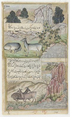 """Babur's interest in minute details of the natural world was continued by many of his successors. This illustration : """"Two Blue Bulls and Two Hog Deer"""" is the reverse side of previous one: """"Two Wild Buffalo."""" Islamic painting is characteristically either: Arab, Turkish, Persian or Mughul. Can you identify the charactertistics that create these divisions.  It is visual!"""