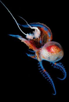 An amazing looking Octopus...Nature doing it's magic!