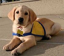 Puppy Stories - Canine Companions for Independence