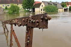 even snails need to escape a flood - Germany after flooding June 2013