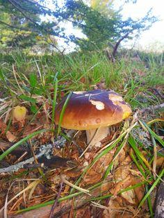 Country Names, Country Life, France, Homeland, Fungi, Stuffed Mushrooms, Facebook, Spring, Boletus Edulis