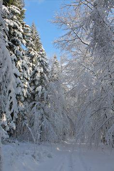 Feudenberg - Flecker Wald im Winter