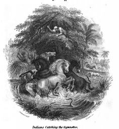 """In 1800, naturalist Alexander von Humboldt described a fanciful scene involving """"fishing with horses."""" A modern study suggests that the story wasn't so fanciful after all."""