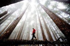 trees, big trees