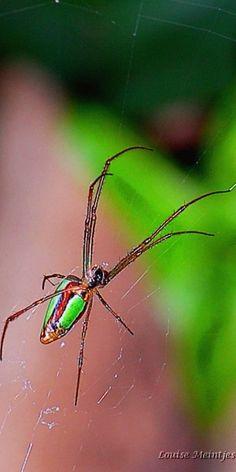 Spider n web #wildlife #macro