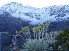 Pico Bolívar, Sierra Nevada National Park, Mérida State, Venezuela - With perennial snow, the World's highest and longest cable-car, and a Frailejón flower