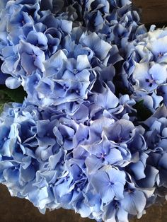 Hydrangea 'Challenge'...Sold in bunches of 10 stems from the Flowermonger the wholesale floral home delivery service.