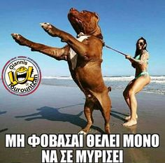 Funny Quotes, Funny Memes, Greek, Animals, Photos, Humor, Funny Phrases, Animales, Animaux