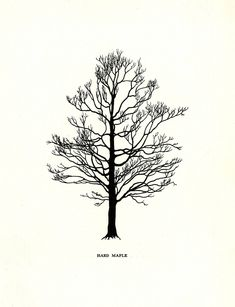 Tree Flowers of Forest, Park and Street illustrated by Olga Smith