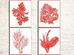 Customizable Colors: Antique Illustration Red Sea Coral Print Set  Coral Wall Art, Coral Print,