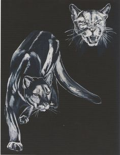 Patagonia, Panther, Paintings, Album, Shirts, Animals, Libros, Illustrations, End Of The World