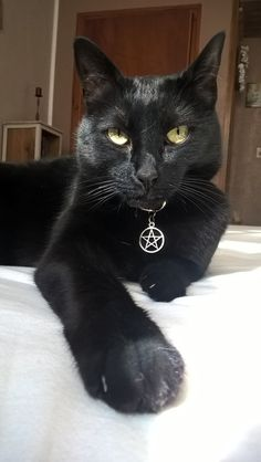 Cats are Very Lovable Creatures Baby Animals, Funny Animals, Cute Animals, I Love Cats, Cool Cats, Black Cat Aesthetic, Fancy Cats, Beautiful Cats, Pretty Cats