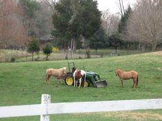 Horses and a John Deere tractor