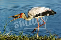 Bird – Snatch Stock Images - Stock Photography | Vectors | Graphics | Videos Vector Graphics, Animal Photography, Vectors, Bird, Pets, Videos, Animals, Image, Animales