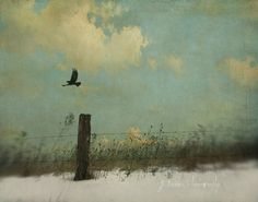 spirit-of-trochilidae:  Your Time Has Come by jamie heiden on Flickr.