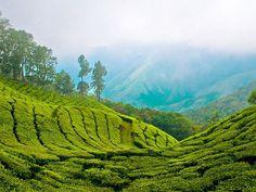 Mathikettan Shola National Park - in Kerala, India