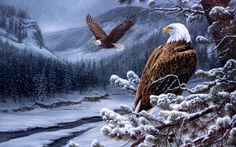 eagle wallpaper hd pack