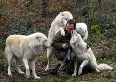 White Wolf : Man Who Runs With the Wolves Animals And Pets, Baby Animals, Funny Animals, Cute Animals, Strange Animals, Wild Animals, Beautiful Wolves, Beautiful Dogs, Animals Beautiful